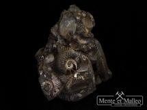 Amonity Quenstedtoceras, skamieniałe drewno, małże i inne