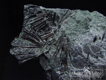 Igiełkowe skupienia turmalinów w skale - drawit