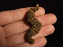 Koprolit - skamieniała kupa