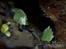 Rzadki anapait wewnątrz muszli ślimaka